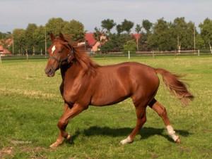 Pferde Hof Brentano