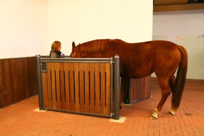 Gesundheit der Pferde
