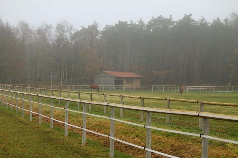 Offener Stall für Pferde