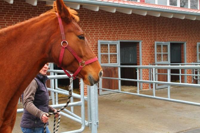 Pferd zur Untersuchung