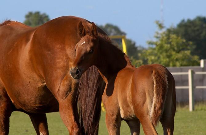Weide Pferde Emsland