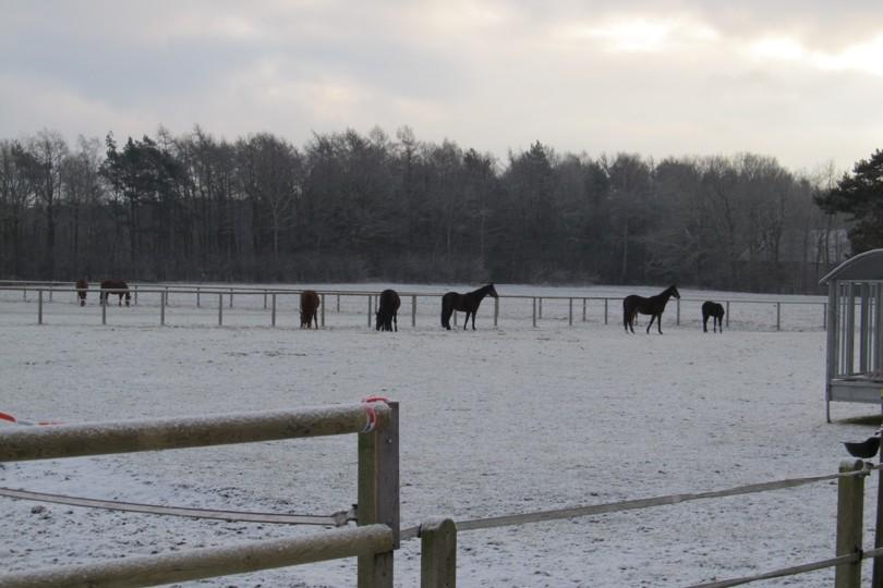 Weiden im Winter Pferde