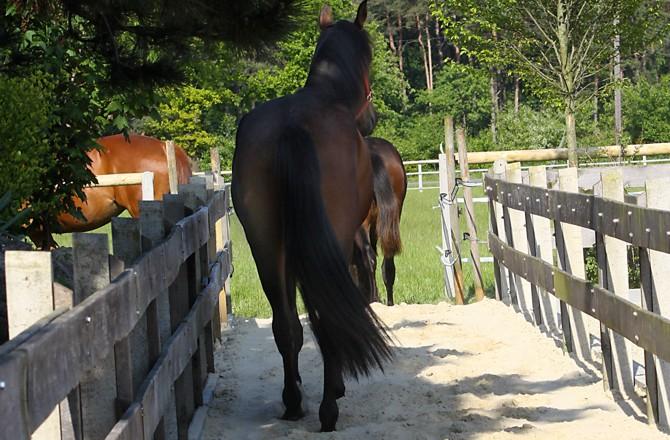Pferde Verständnis