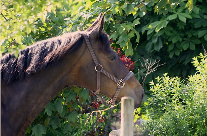 Pferde Wohlergehen